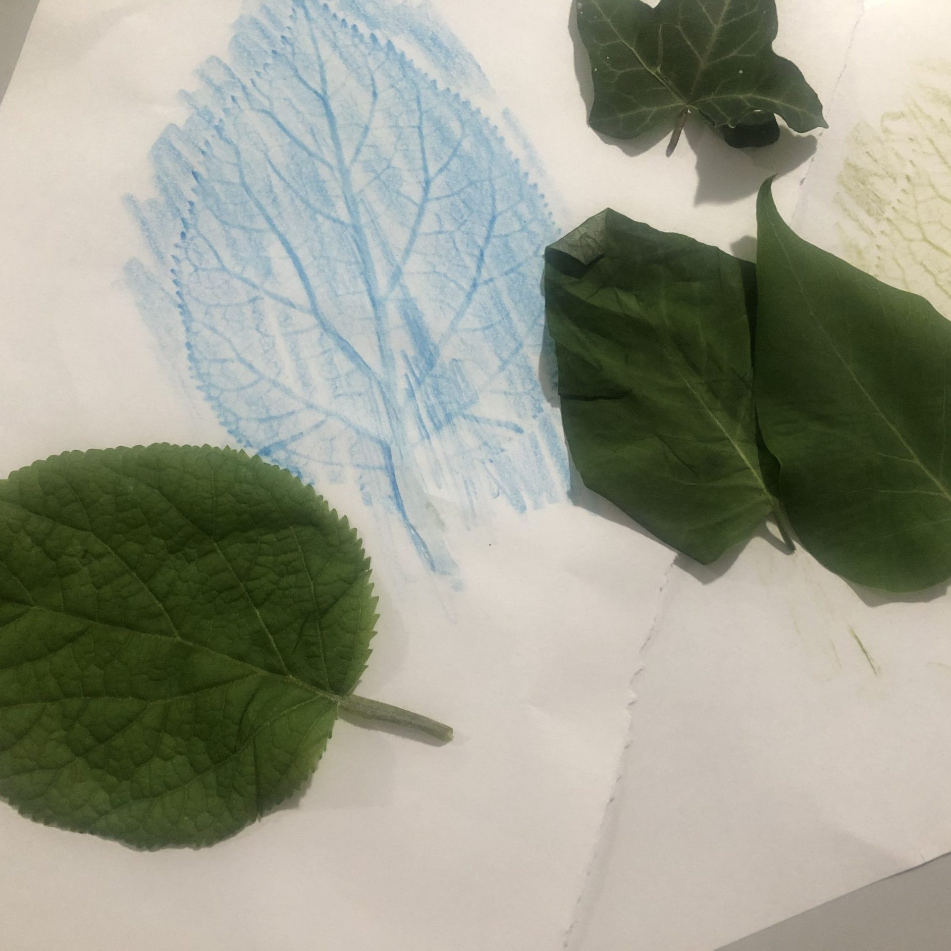 Leaf Rubbings